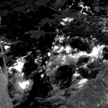 black stream